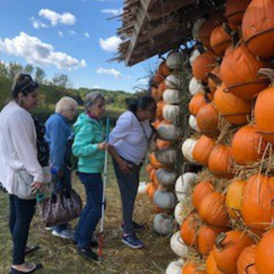 Clients and volunteers inspecting a log cabin covered in pumpkins